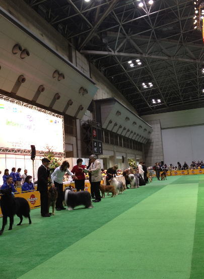 FCI Japan international dog show 2012_f0126965_2121052.jpg