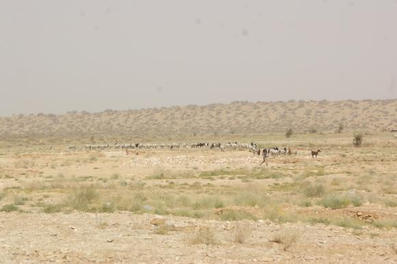 PJAM2012#17 砂漠の生活_a0186568_2350524.jpg