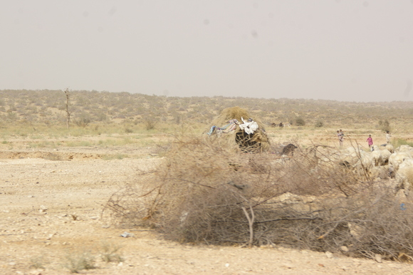 PJAM2012#17 砂漠の生活_a0186568_23532714.jpg