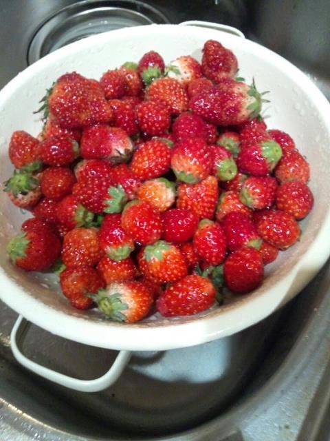 strawberry jam_b0195783_222486.jpg