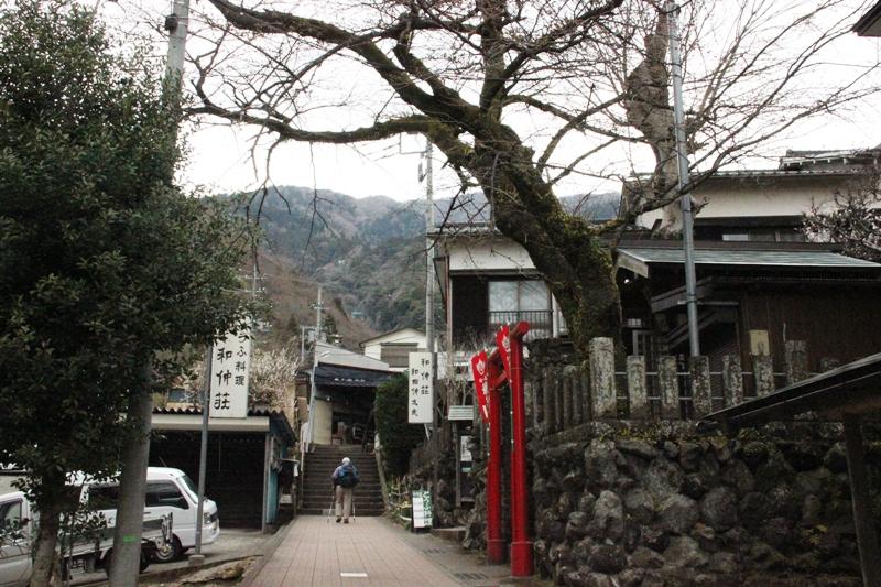 丹沢入門 大山 ①_a0127090_16265748.jpg