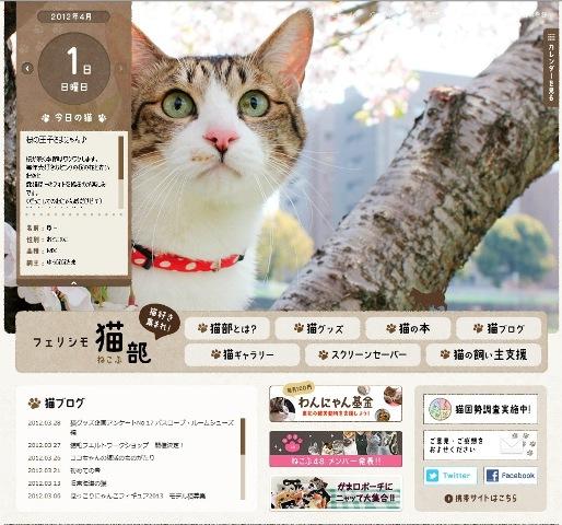フェリシモ猫部今日の猫 ぽー編。_a0143140_23522845.jpg