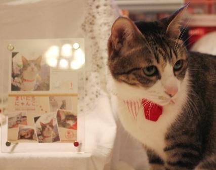 フェリシモ猫部今日の猫 ぽー編。_a0143140_23534011.jpg