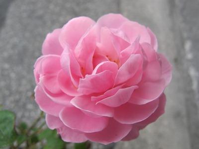 4月 1日 春休み☆_b0158746_165996.jpg