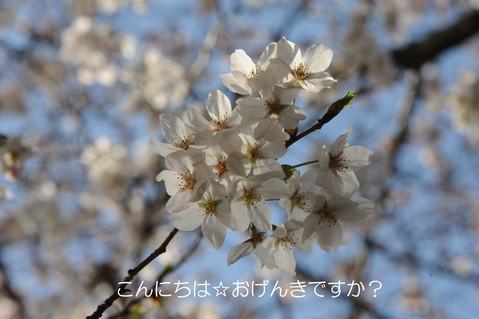 f0206452_10425375.jpg