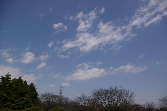 小金井公園、桜はまだまだ_a0186568_2102440.jpg