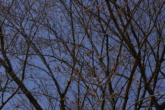 小金井公園、桜はまだまだ_a0186568_214443.jpg