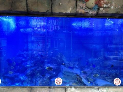 ドン・キホーテ梅田店の水槽を見てきたよ._b0151584_23532227.jpg