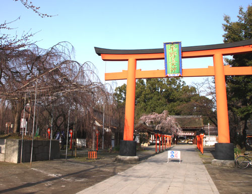 平野神社 魁さくら_e0048413_2223662.jpg