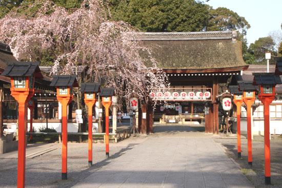 平野神社 魁さくら_e0048413_2224880.jpg