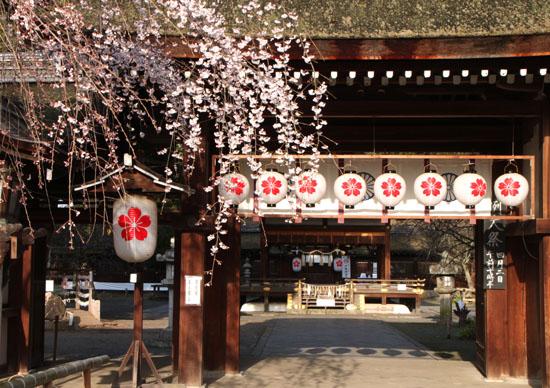平野神社 魁さくら_e0048413_223151.jpg