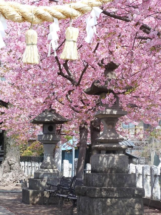 近所の神社_c0213220_1659929.jpg