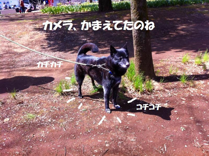 a0147921_20255917.jpg
