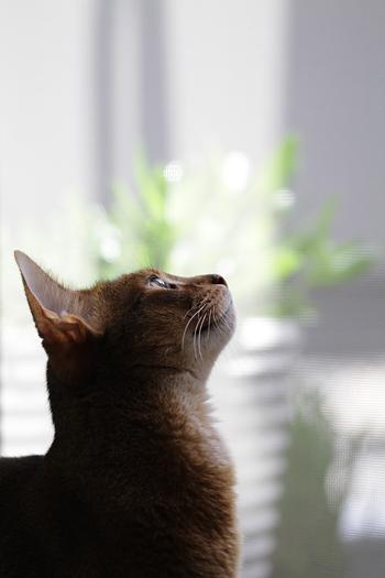[猫的]イメージ_e0090124_6591946.jpg