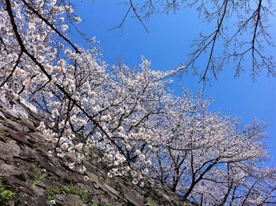 お花見ばい_f0035333_2121388.jpg