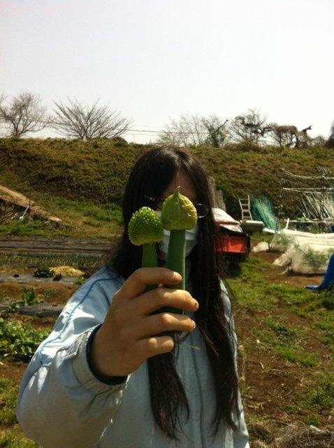 ブロッコリーや芽キャベツも最後の収穫に入ります_c0222448_19345116.jpg