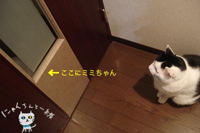 ミミちゃん 三月二十九日_e0031853_3551463.jpg