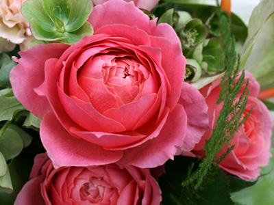 最近のお花たち・・・_a0118355_18105380.jpg