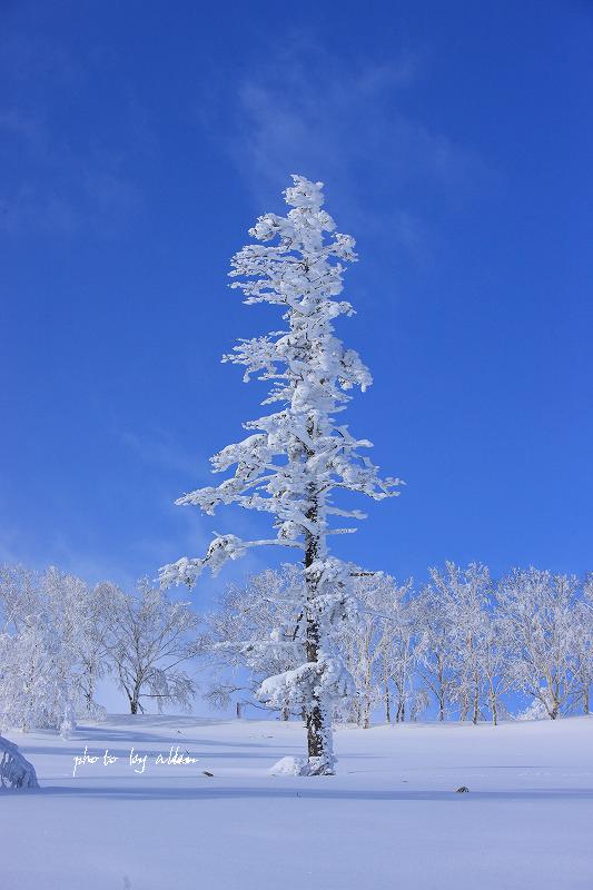 DD51三十連朝焼けのタックトレインあんど樹氷と青空より~_a0039860_1939363.jpg