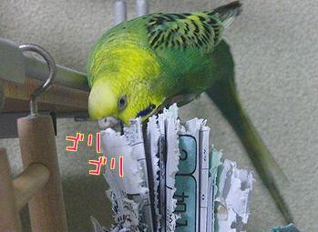f0196665_22112139.jpg