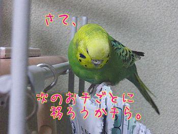 f0196665_22113824.jpg