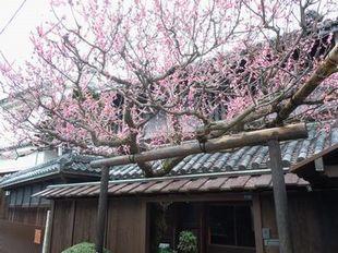 早春の能勢街道、池田界隈を歩く_b0102572_012751.jpg