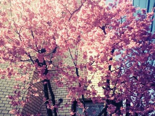 春。とみ_f0174088_047290.jpg