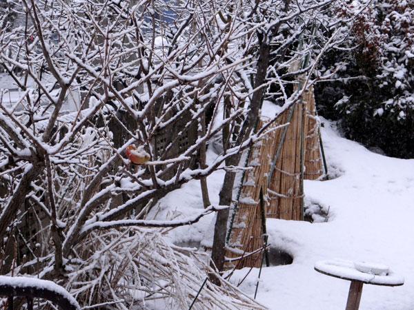 4月の庭の雪景色♪_a0136293_14361583.jpg