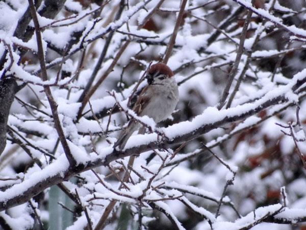 4月の庭の雪景色♪_a0136293_1436411.jpg