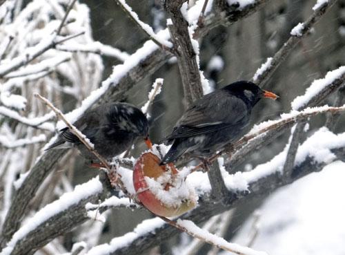 4月の庭の雪景色♪_a0136293_14374550.jpg