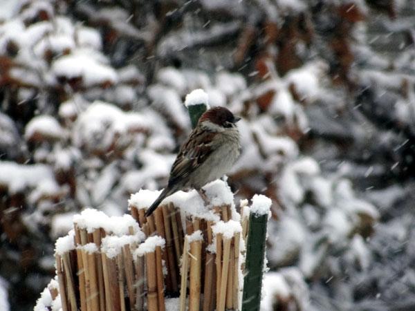 4月の庭の雪景色♪_a0136293_14382066.jpg