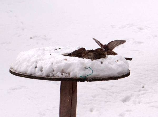 4月の庭の雪景色♪_a0136293_1439171.jpg