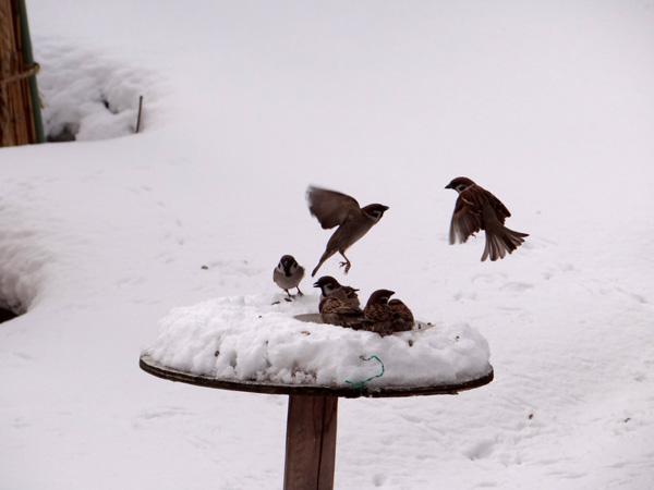 4月の庭の雪景色♪_a0136293_1439651.jpg