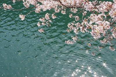緑色と桜色_c0239901_10232788.jpg