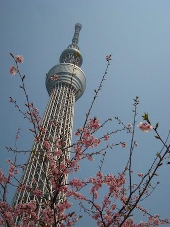 サクラ、桜、春うらら _d0154102_10195799.jpg