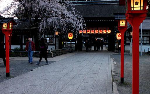平野神社 魁さくら  ライトアップ _e0048413_11212742.jpg
