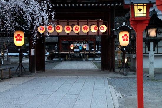 平野神社 魁さくら  ライトアップ _e0048413_11214063.jpg