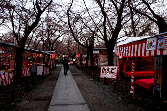 平野神社 魁さくら  ライトアップ _e0048413_1121446.jpg