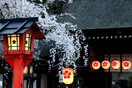 平野神社 魁さくら  ライトアップ _e0048413_11215417.jpg