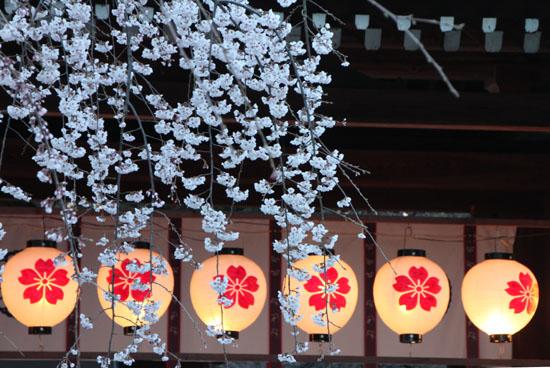 平野神社 魁さくら  ライトアップ _e0048413_1122650.jpg