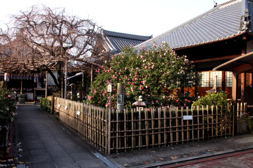 地蔵院(つばきでら) _e0048413_22135337.jpg