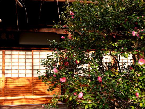 地蔵院(つばきでら) _e0048413_22141657.jpg