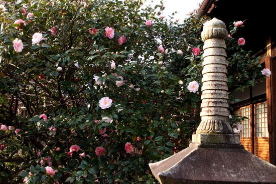 地蔵院(つばきでら) _e0048413_22142867.jpg