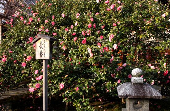 地蔵院(つばきでら) _e0048413_2214481.jpg
