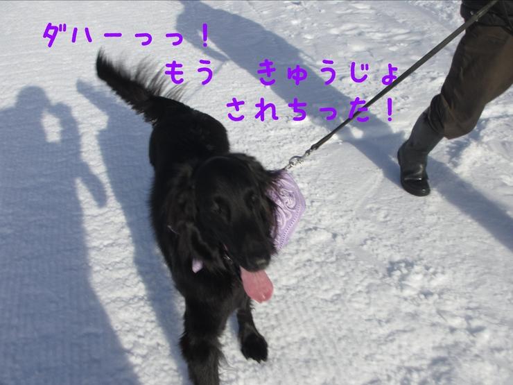 c0237824_10532491.jpg