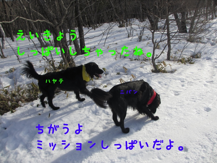 c0237824_1055710.jpg