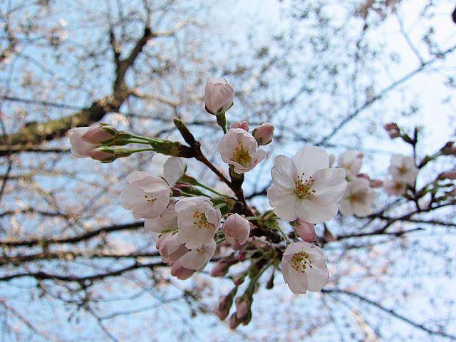 春のシニア健診_c0062832_346437.jpg