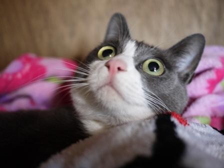 猫のお友だち 珊瑚ちゃん祿太くん編。_a0143140_21284423.jpg