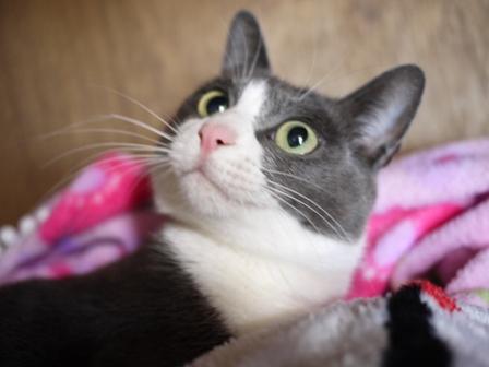 猫のお友だち 珊瑚ちゃん祿太くん編。_a0143140_21302517.jpg