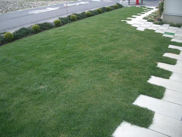 初芝刈り_a0155844_161854.jpg